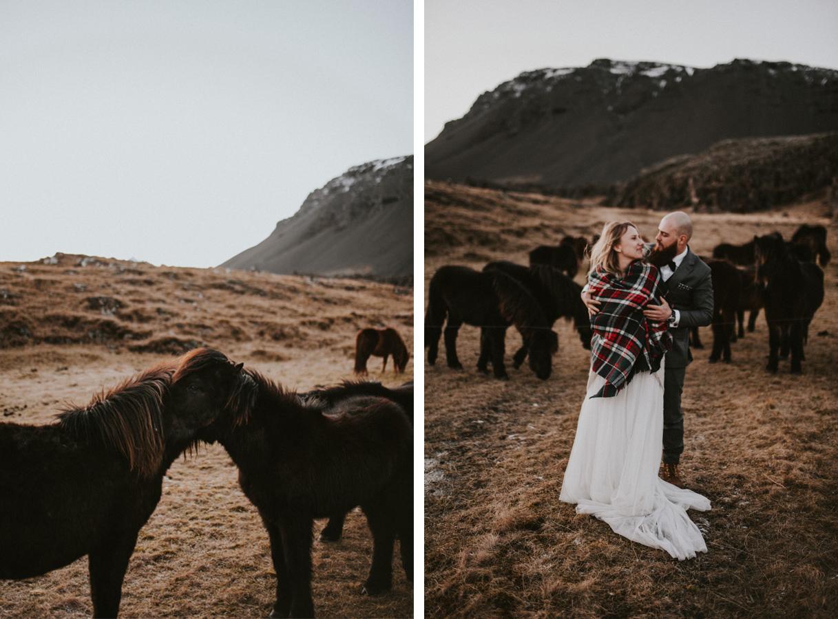 Sesja plenerowa konie kuce islandia podróż poślubna skandynawia pytlikbak