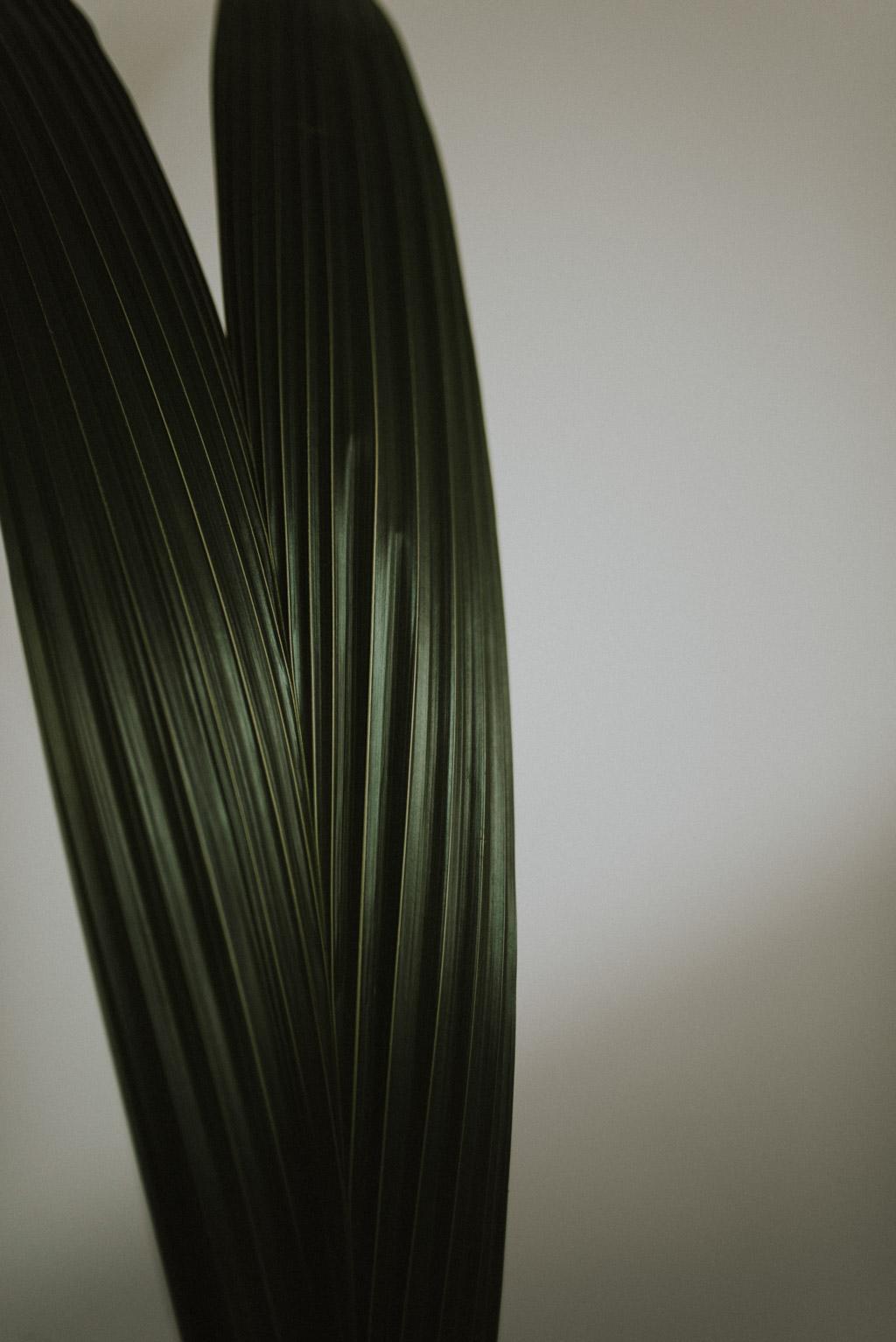 liście palmy kokosa