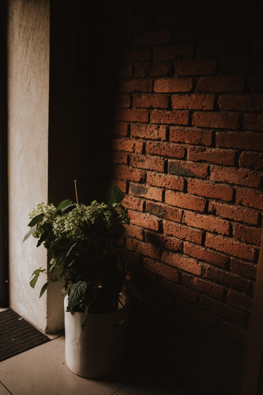 roślinność w kotulińskiego 6