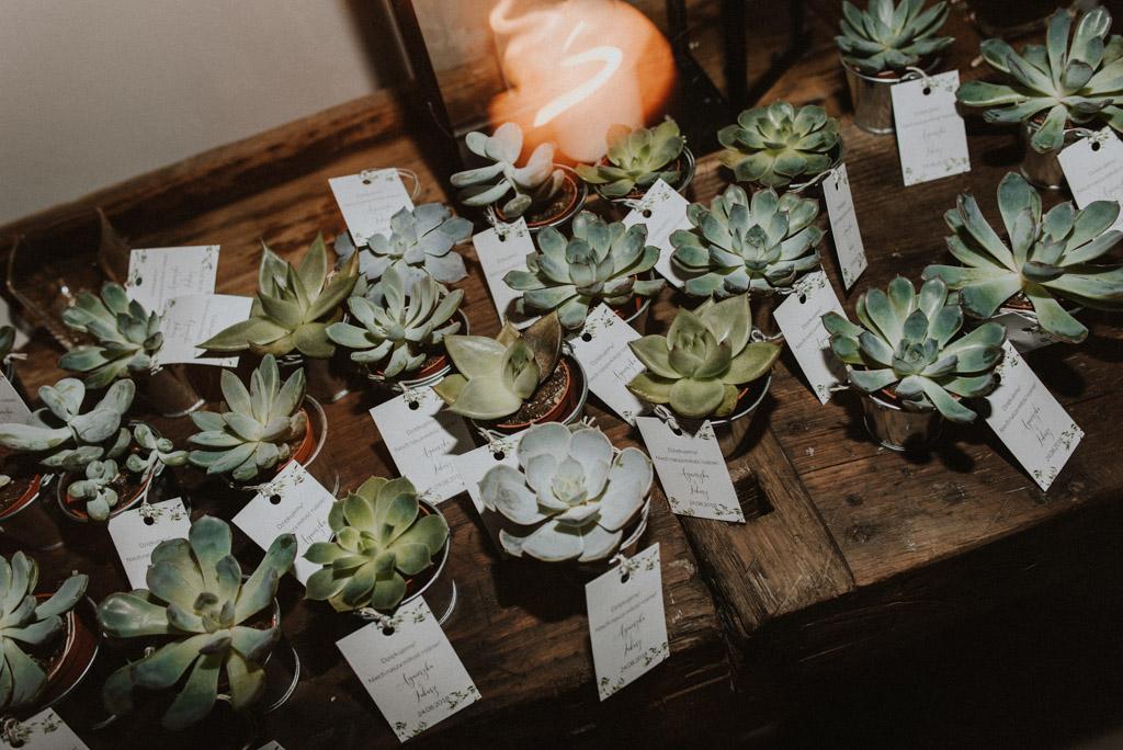 sukulenty jako prezent dla gości weselnych