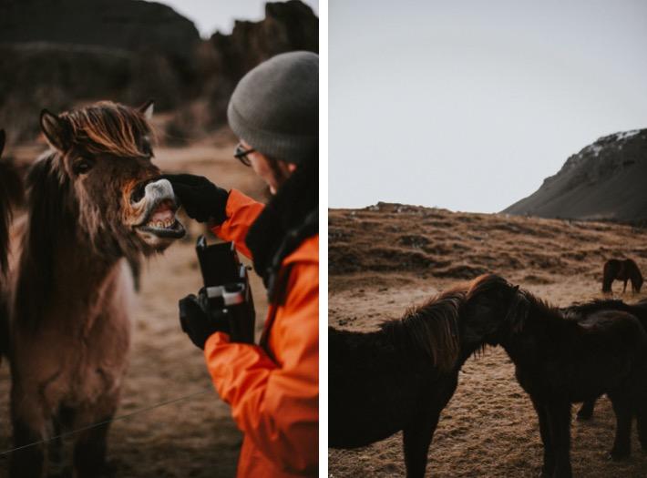 Islandzkie konie kuce pytlikbak iceland horses