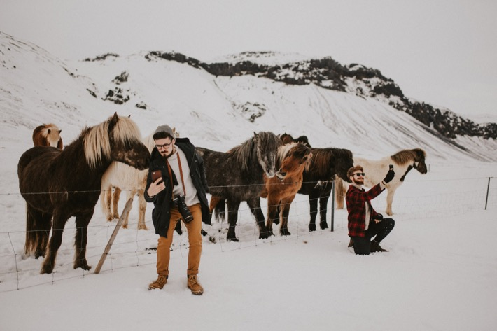 Islandzkie konie kuce pytlikbak horses